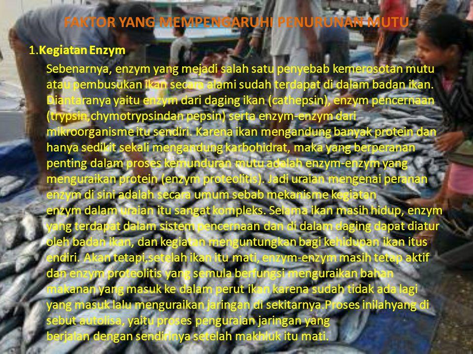 FAKTOR YANG MEMPENGARUHI PENURUNAN MUTU 1.Kegiatan Enzym Sebenarnya, enzym yang mejadi salah satu penyebab kemerosotan mutu atau pembusukan ikan secara alami sudah terdapat di dalam badan ikan.