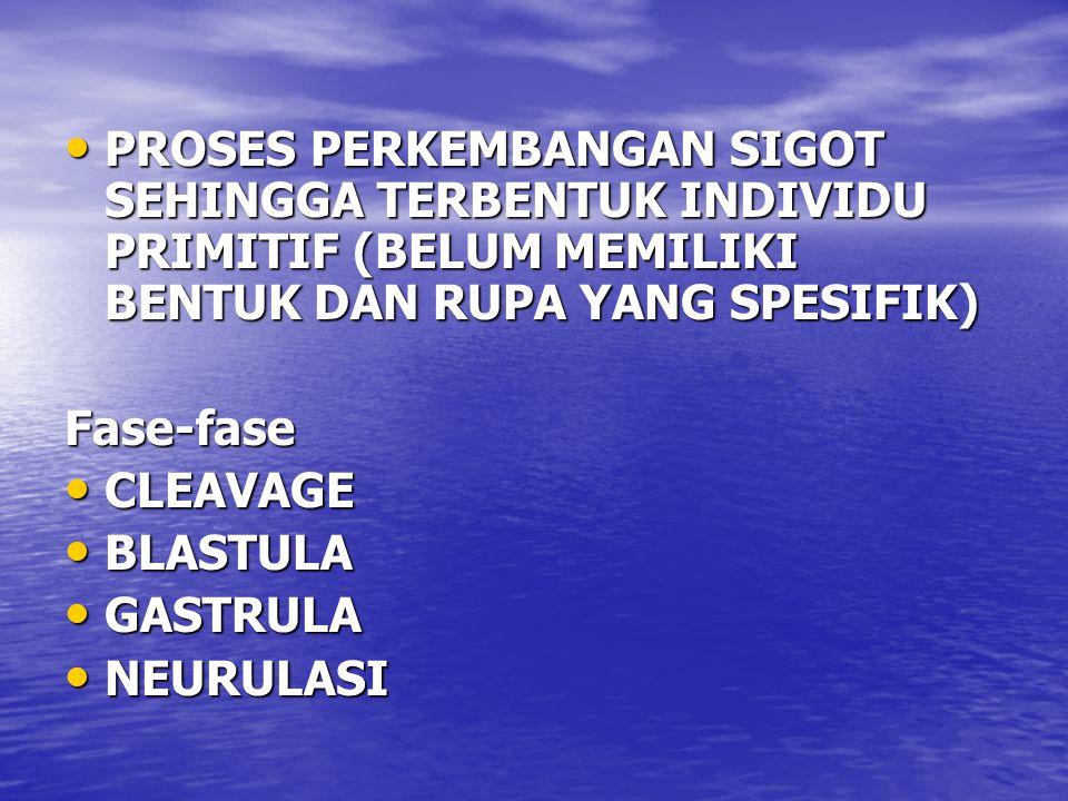 PROSES PERKEMBANGAN SIGOT SEHINGGA TERBENTUK INDIVIDU PRIMITIF (BELUM MEMILIKI BENTUK DAN RUPA YANG SPESIFIK) PROSES PERKEMBANGAN SIGOT SEHINGGA TERBENTUK INDIVIDU PRIMITIF (BELUM MEMILIKI BENTUK DAN RUPA YANG SPESIFIK)Fase-fase CLEAVAGE CLEAVAGE BLASTULA BLASTULA GASTRULA GASTRULA NEURULASI NEURULASI