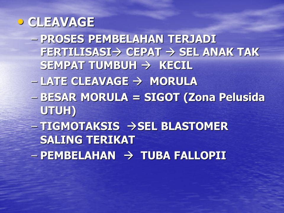 CLEAVAGE CLEAVAGE –PROSES PEMBELAHAN TERJADI FERTILISASI  CEPAT  SEL ANAK TAK SEMPAT TUMBUH  KECIL –LATE CLEAVAGE  MORULA –BESAR MORULA = SIGOT (Zona Pelusida UTUH) –TIGMOTAKSIS  SEL BLASTOMER SALING TERIKAT –PEMBELAHAN  TUBA FALLOPII