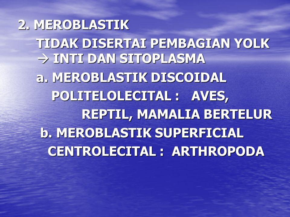 2. MEROBLASTIK TIDAK DISERTAI PEMBAGIAN YOLK  INTI DAN SITOPLASMA TIDAK DISERTAI PEMBAGIAN YOLK  INTI DAN SITOPLASMA a. MEROBLASTIK DISCOIDAL a. MER