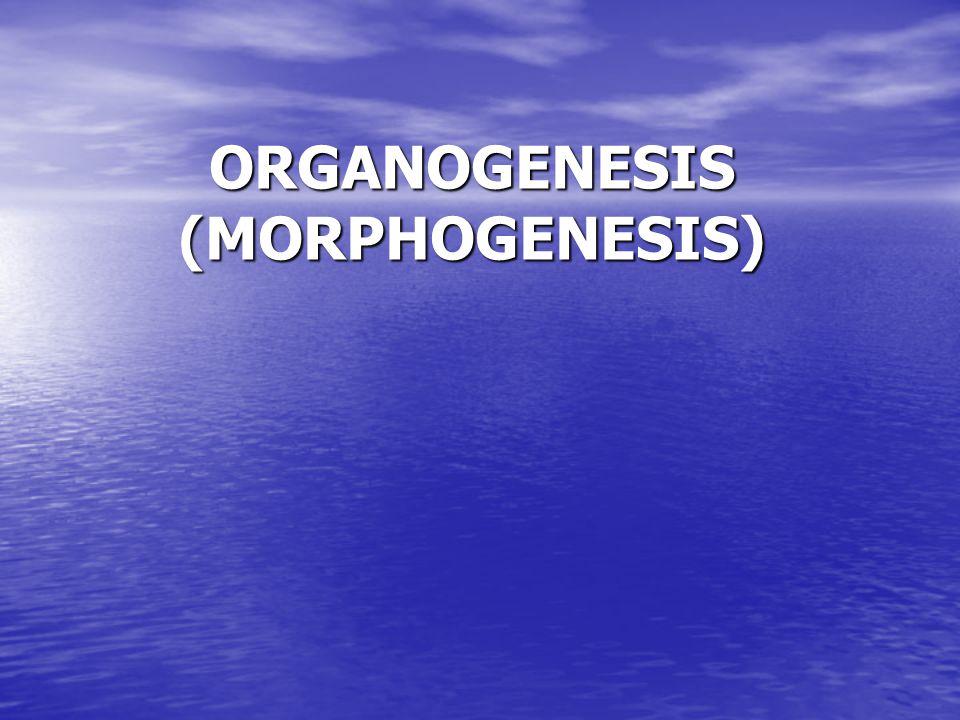 ORGANOGENESIS (MORPHOGENESIS)