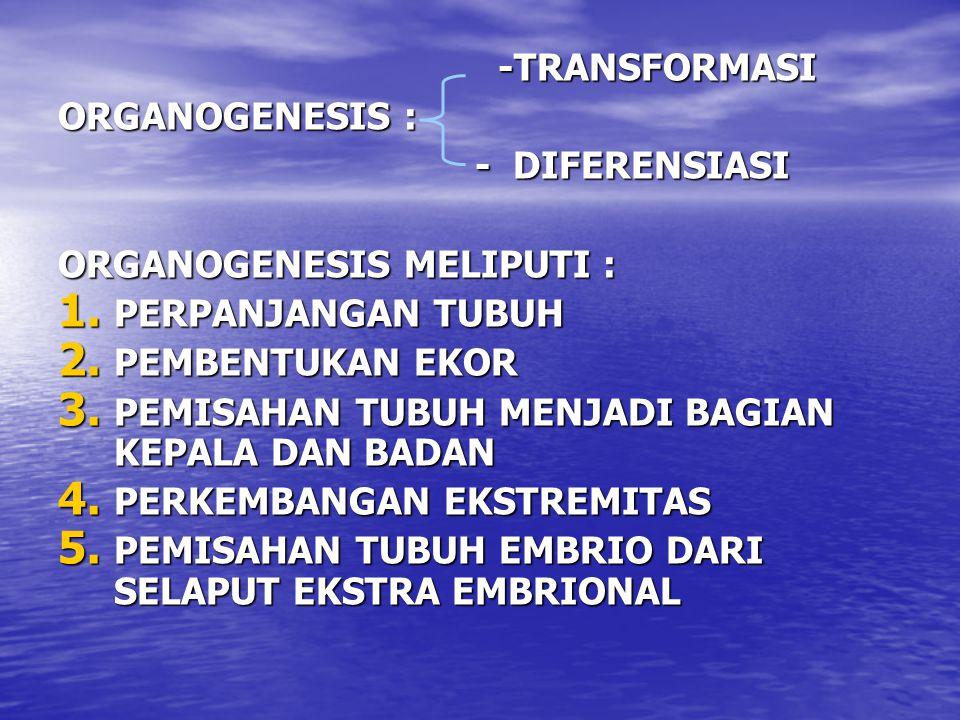-TRANSFORMASI -TRANSFORMASI ORGANOGENESIS : - DIFERENSIASI - DIFERENSIASI ORGANOGENESIS MELIPUTI : 1. PERPANJANGAN TUBUH 2. PEMBENTUKAN EKOR 3. PEMISA