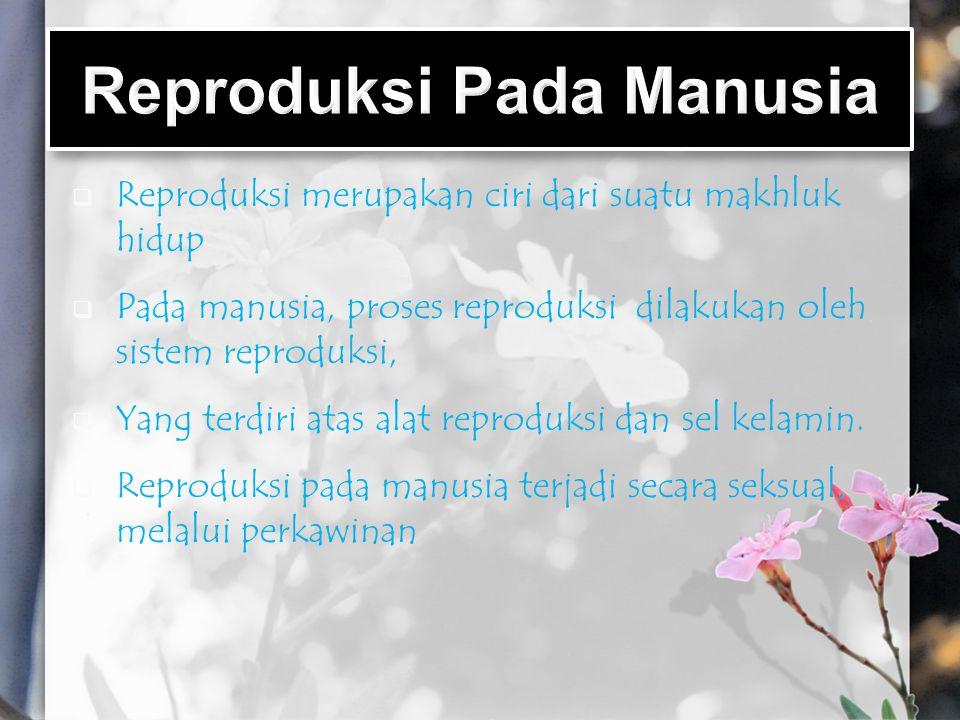  Reproduksi merupakan ciri dari suatu makhluk hidup  Pada manusia, proses reproduksi dilakukan oleh sistem reproduksi,  Yang terdiri atas alat repr