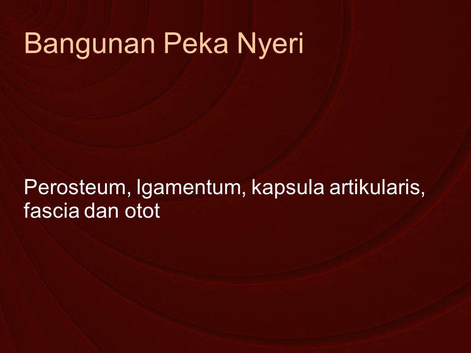 Bangunan Peka Nyeri Perosteum, lgamentum, kapsula artikularis, fascia dan otot