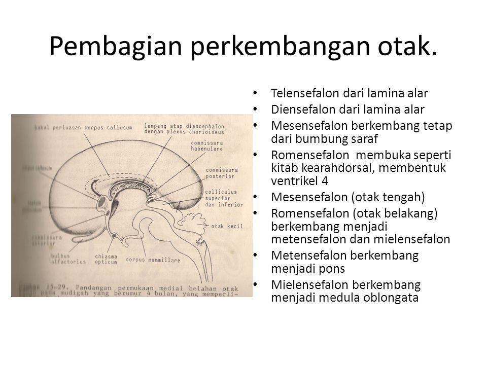 Pembagian perkembangan otak. Telensefalon dari lamina alar Diensefalon dari lamina alar Mesensefalon berkembang tetap dari bumbung saraf Romensefalon