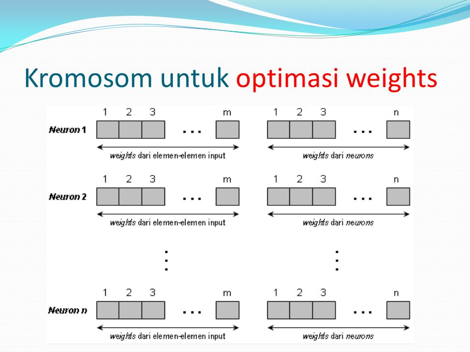 Kromosom untuk optimasi weights