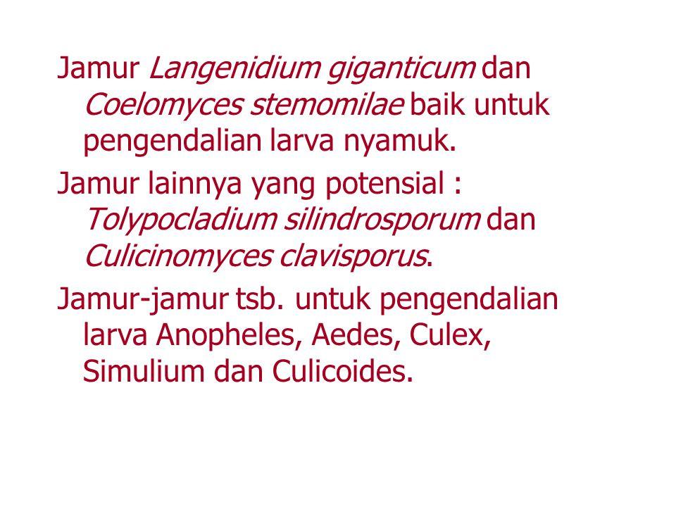Jamur Langenidium giganticum dan Coelomyces stemomilae baik untuk pengendalian larva nyamuk. Jamur lainnya yang potensial : Tolypocladium silindrospor