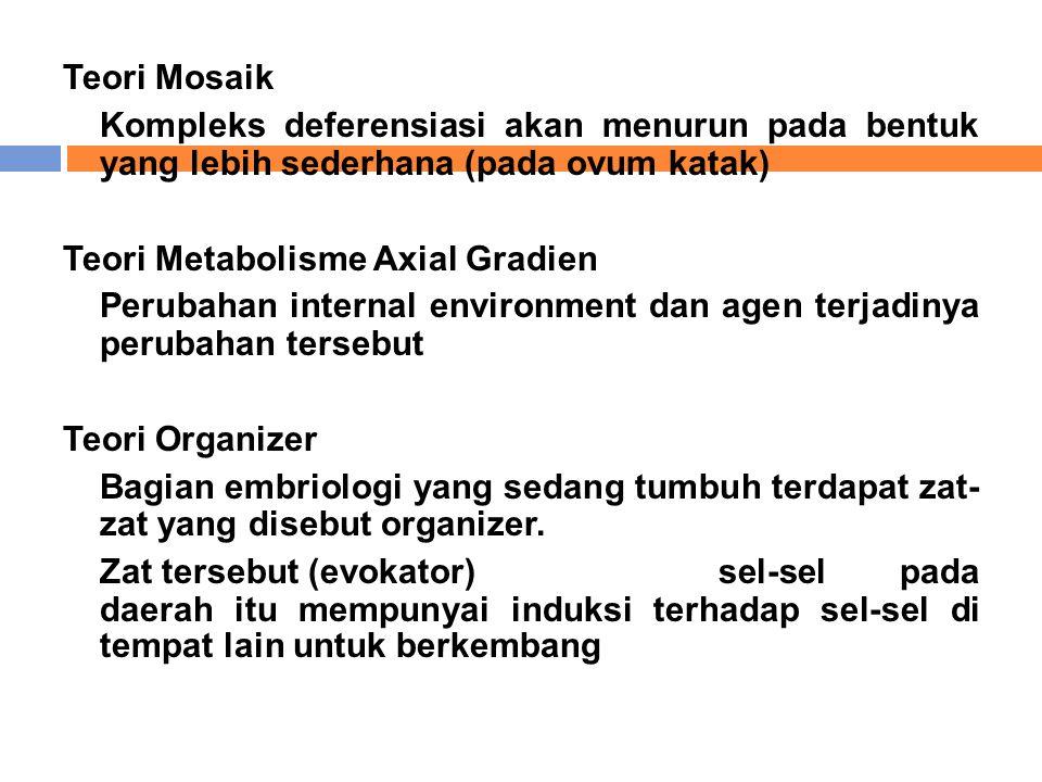 Teori Mosaik Kompleks deferensiasi akan menurun pada bentuk yang lebih sederhana (pada ovum katak) Teori Metabolisme Axial Gradien Perubahan internal