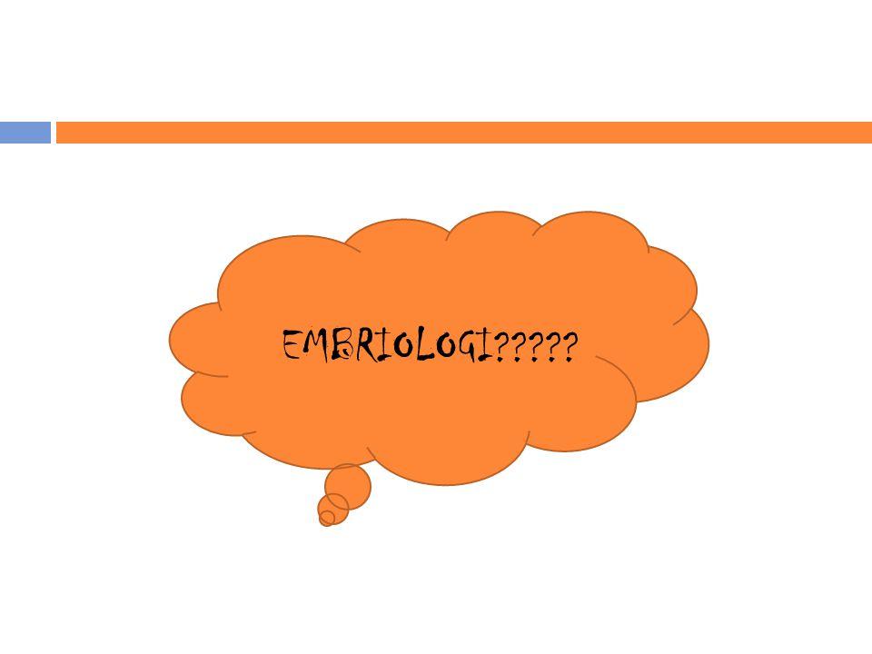 EMBRIOLOGI?????