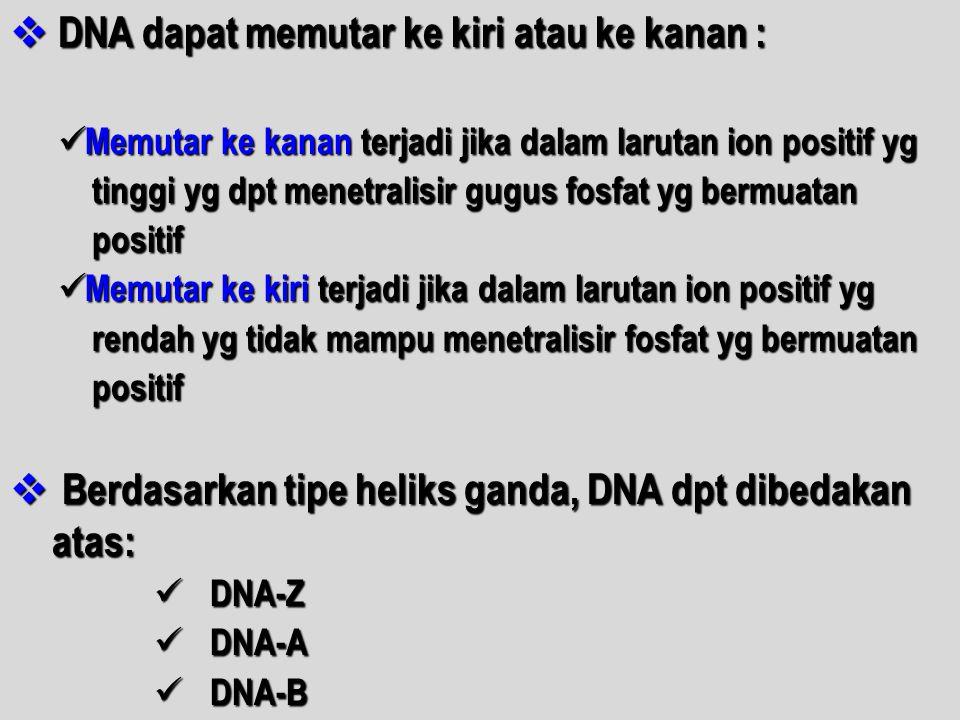  DNA dapat memutar ke kiri atau ke kanan : Memutar ke kanan terjadi jika dalam larutan ion positif yg Memutar ke kanan terjadi jika dalam larutan ion