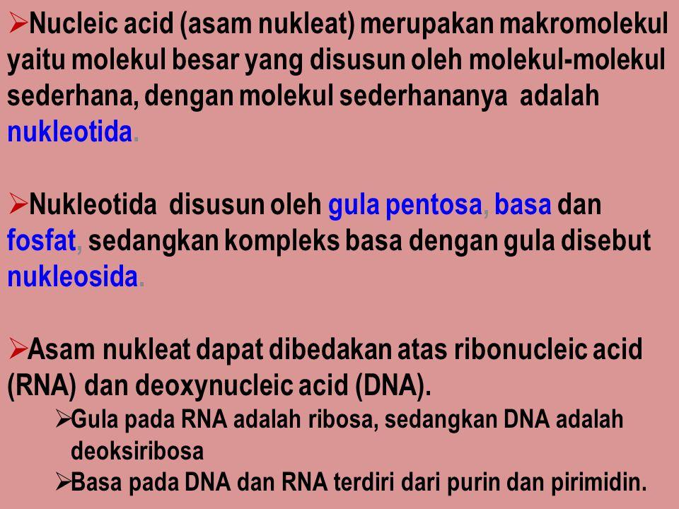  Nucleic acid (asam nukleat) merupakan makromolekul yaitu molekul besar yang disusun oleh molekul-molekul sederhana, dengan molekul sederhananya adal