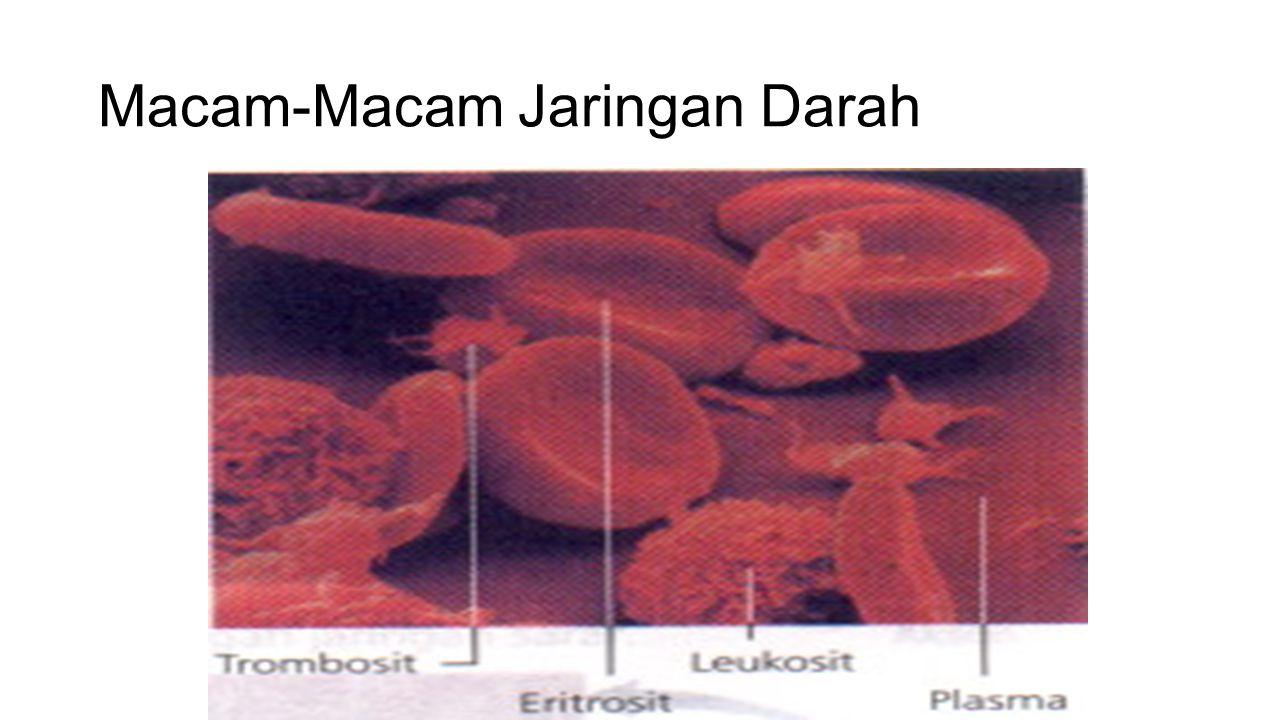 Macam-Macam Jaringan Darah