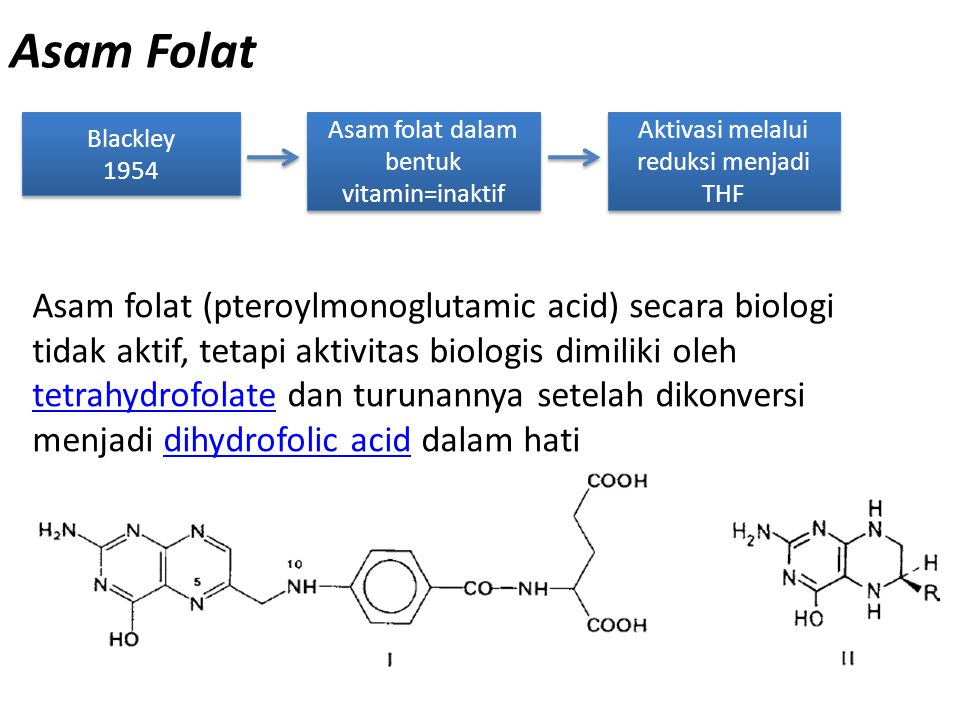 Asam Folat Blackley 1954 Blackley 1954 Asam folat dalam bentuk vitamin=inaktif Asam folat (pteroylmonoglutamic acid) secara biologi tidak aktif, tetap