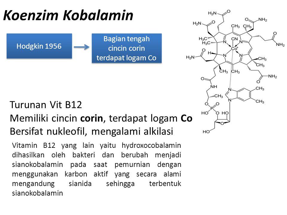 Koenzim Kobalamin Hodgkin 1956 Bagian tengah cincin corin terdapat logam Co Turunan Vit B12 Memiliki cincin corin, terdapat logam Co Bersifat nukleofi