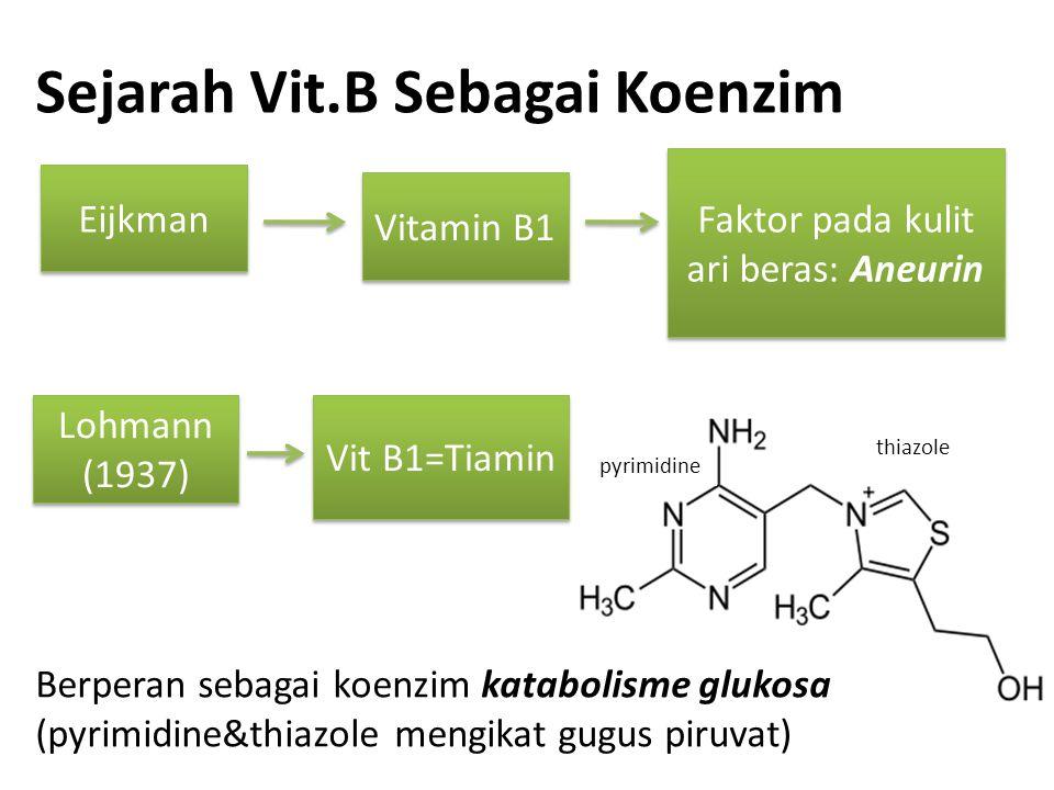 Sejarah Vit.B Sebagai Koenzim Eijkman Vitamin B1 Faktor pada kulit ari beras: Aneurin Lohmann (1937) Lohmann (1937) Vit B1=Tiamin pyrimidine thiazole