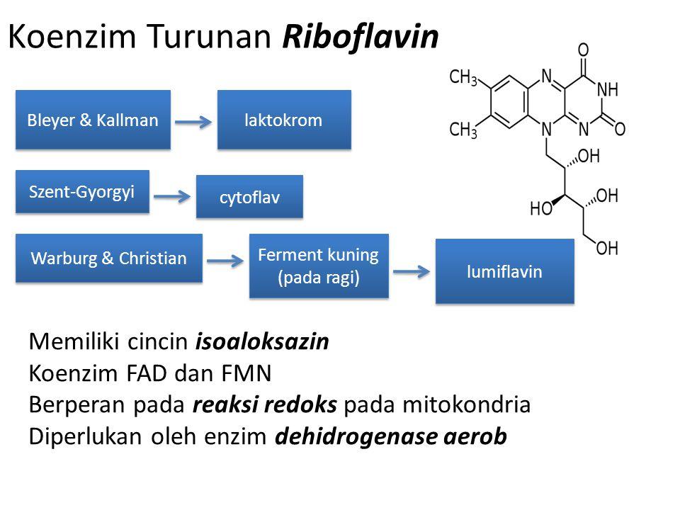 Koenzim Turunan Riboflavin Bleyer & Kallman laktokrom Szent-Gyorgyi cytoflav Warburg & Christian Ferment kuning (pada ragi) lumiflavin Memiliki cincin