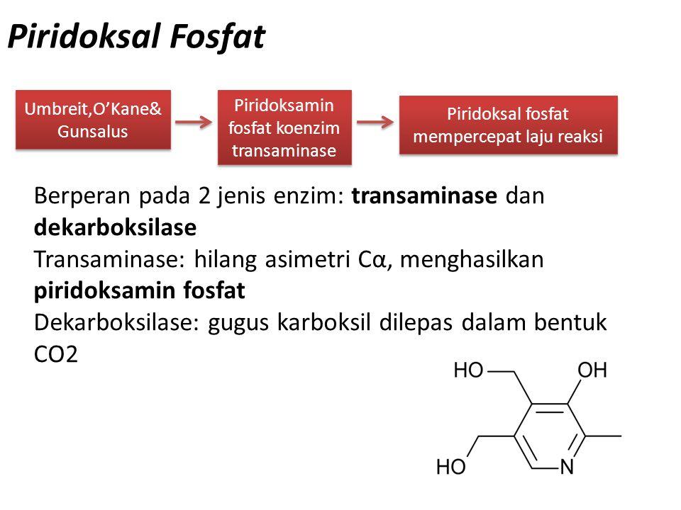Piridoksal Fosfat Umbreit,O'Kane& Gunsalus Piridoksamin fosfat koenzim transaminase Berperan pada 2 jenis enzim: transaminase dan dekarboksilase Trans