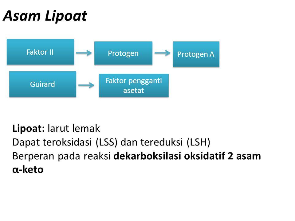 Asam Lipoat Faktor II Protogen Lipoat: larut lemak Dapat teroksidasi (LSS) dan tereduksi (LSH) Berperan pada reaksi dekarboksilasi oksidatif 2 asam α-