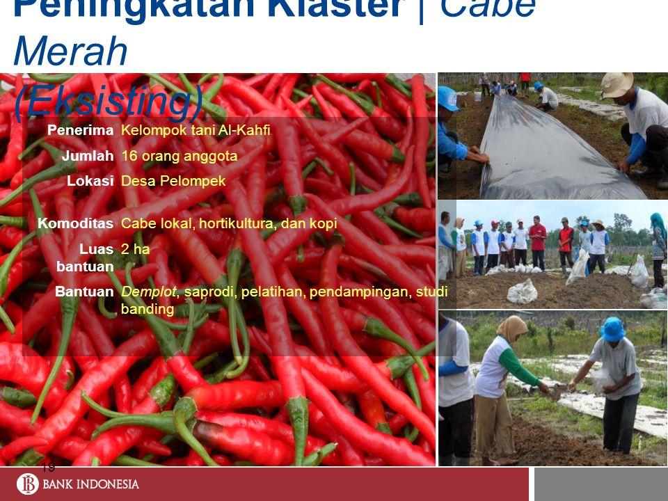 Peningkatan Klaster | Cabe Merah (Eksisting) 19 PenerimaKelompok tani Al-Kahfi Jumlah16 orang anggota LokasiDesa Pelompek KomoditasCabe lokal, hortiku