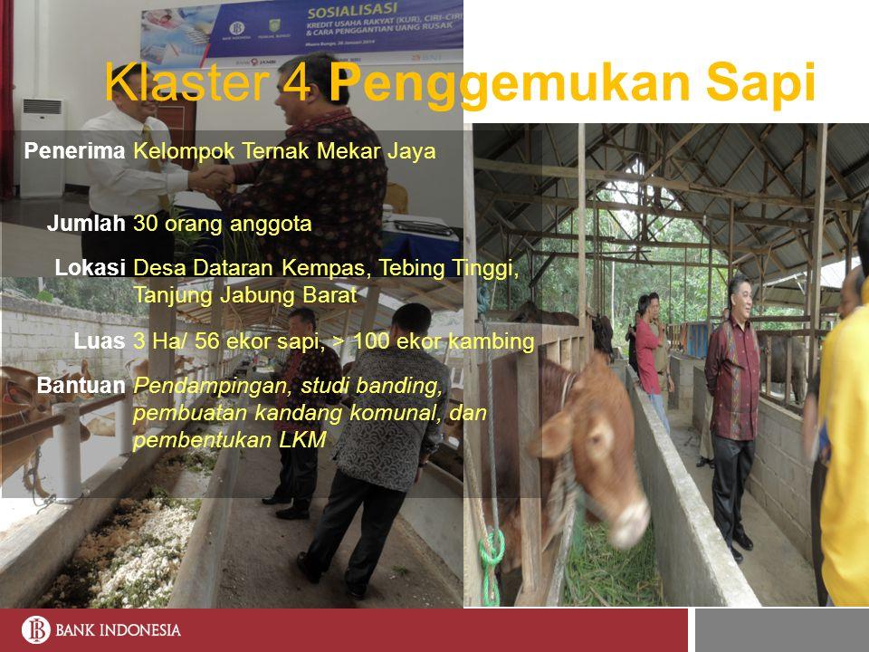 Klaster 4 Penggemukan Sapi PenerimaKelompok Ternak Mekar Jaya Jumlah30 orang anggota LokasiDesa Dataran Kempas, Tebing Tinggi, Tanjung Jabung Barat Lu