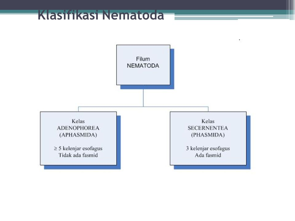 Klasifikasi Nematoda