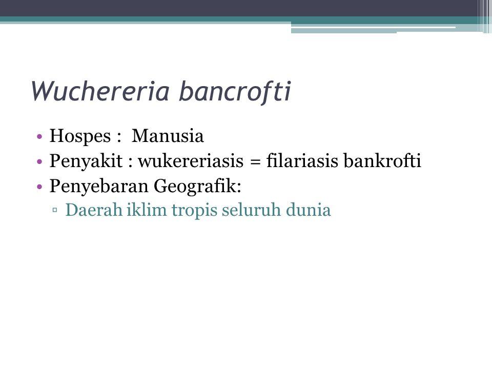 Wuchereria bancrofti Hospes : Manusia Penyakit : wukereriasis = filariasis bankrofti Penyebaran Geografik: ▫Daerah iklim tropis seluruh dunia
