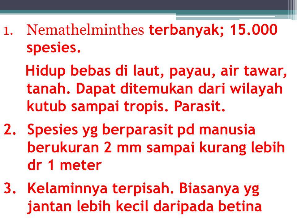 Enterobius vermicularis (cacing kremi)