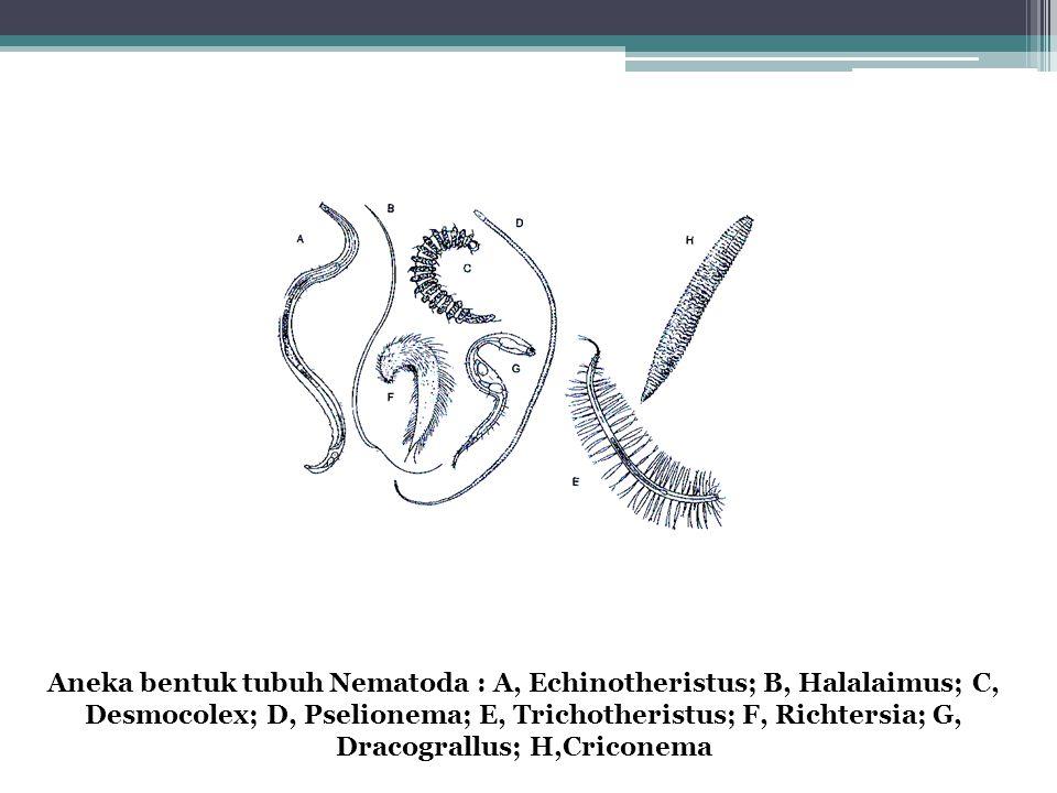 Aneka bentuk tubuh Nematoda : A, Echinotheristus; B, Halalaimus; C, Desmocolex; D, Pselionema; E, Trichotheristus; F, Richtersia; G, Dracograllus; H,C