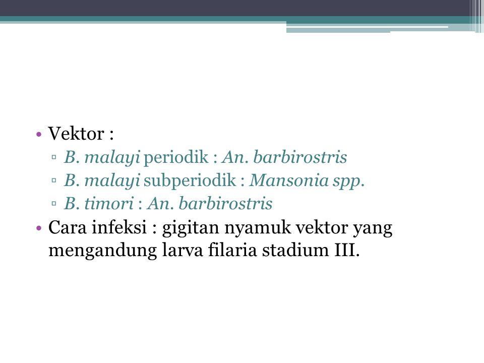Vektor : ▫B. malayi periodik : An. barbirostris ▫B. malayi subperiodik : Mansonia spp. ▫B. timori : An. barbirostris Cara infeksi : gigitan nyamuk vek
