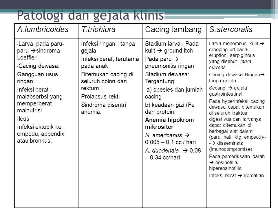 Patologi dan gejala klinis A.lumbricoidesT.trichiuraCacing tambangS.stercoralis Larva pada paru- paru  sindroma Loeffler. Cacing dewasa: Gangguan usu