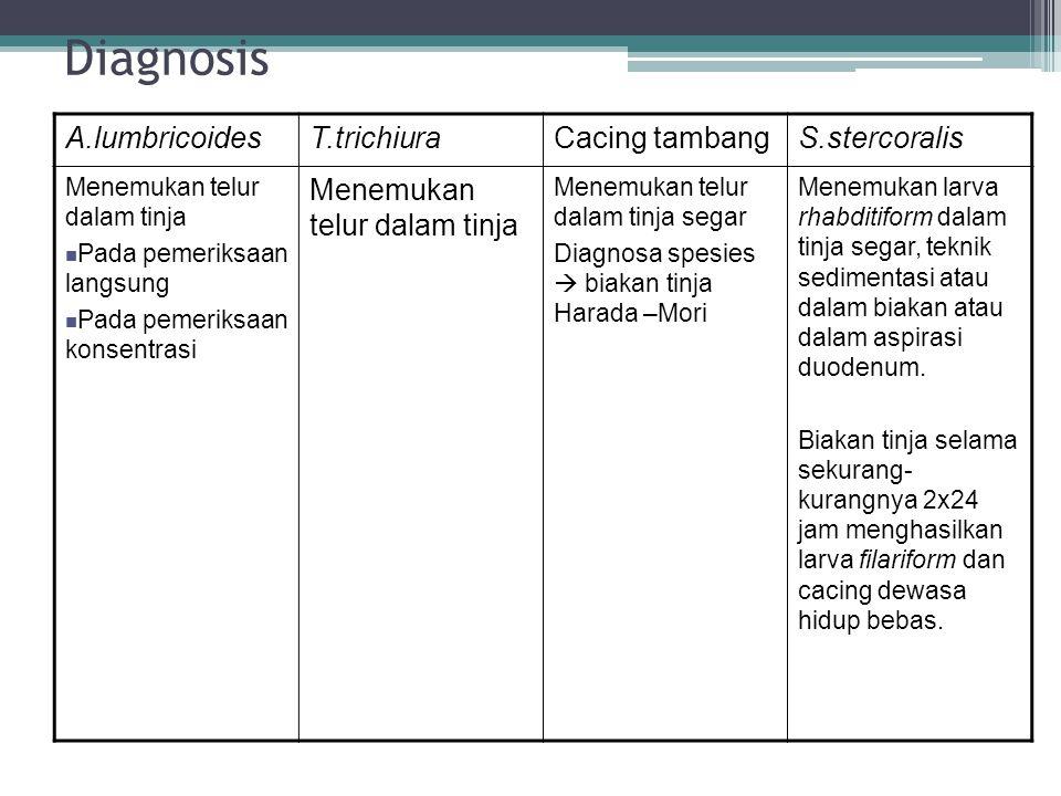 Diagnosis A.lumbricoidesT.trichiuraCacing tambangS.stercoralis Menemukan telur dalam tinja Pada pemeriksaan langsung Pada pemeriksaan konsentrasi Mene
