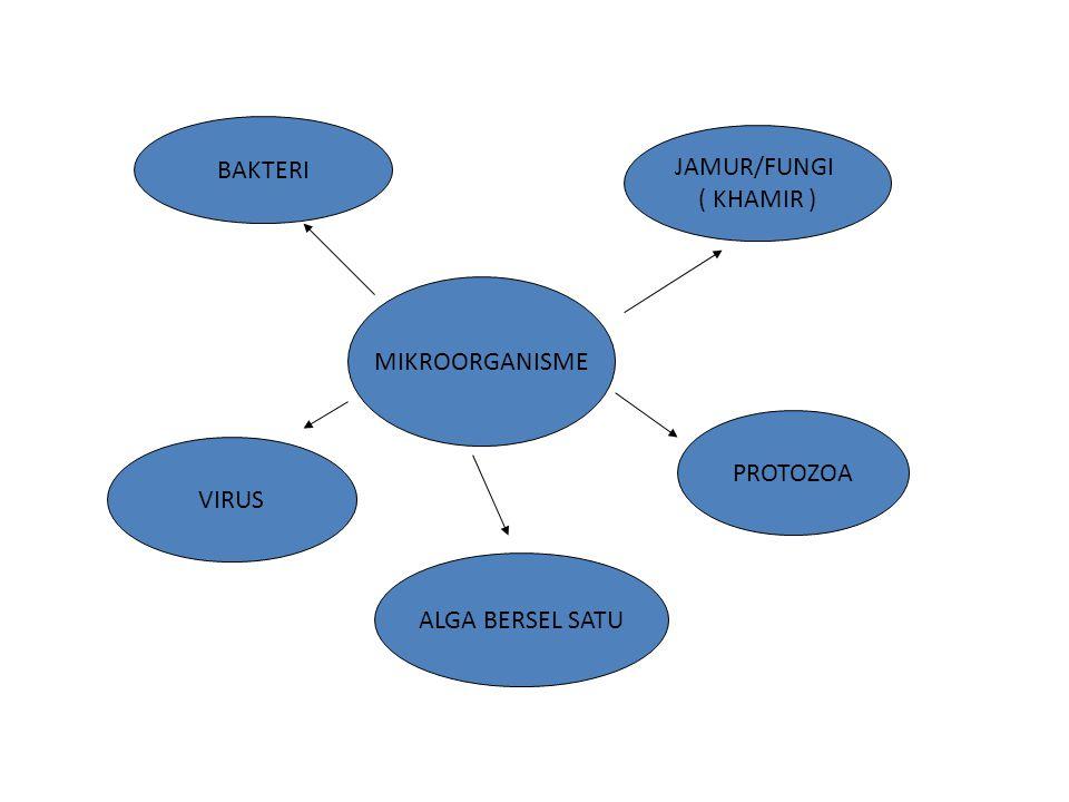 BAKTERI 1.UNISELULER, HIDUP BERKELOMPOK MEMBENTUK KOLONI 2.BERSIFAT HETEROTROF ( PADA UMUMNYA TIDAK BERKLOROFIL ) 3.REPRODUKSI SECARA ASEKSUAL 4.BERBENTUK BULAT/KOKUS, BATANG/BACILLUS, LENGKUNG/VIBRIO 5.TERSEBAR DI HAMPIR SEMUA BAGIAN ALAM, TANAH AIR DAN UDARA 6.ADA YANG MENGUNTUNGKAN ADA YANG MERUGIKAN