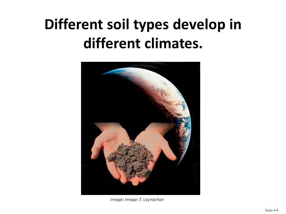 Different soil types develop in different climates. Soils-4-8 Image: Image: T. Loynachan