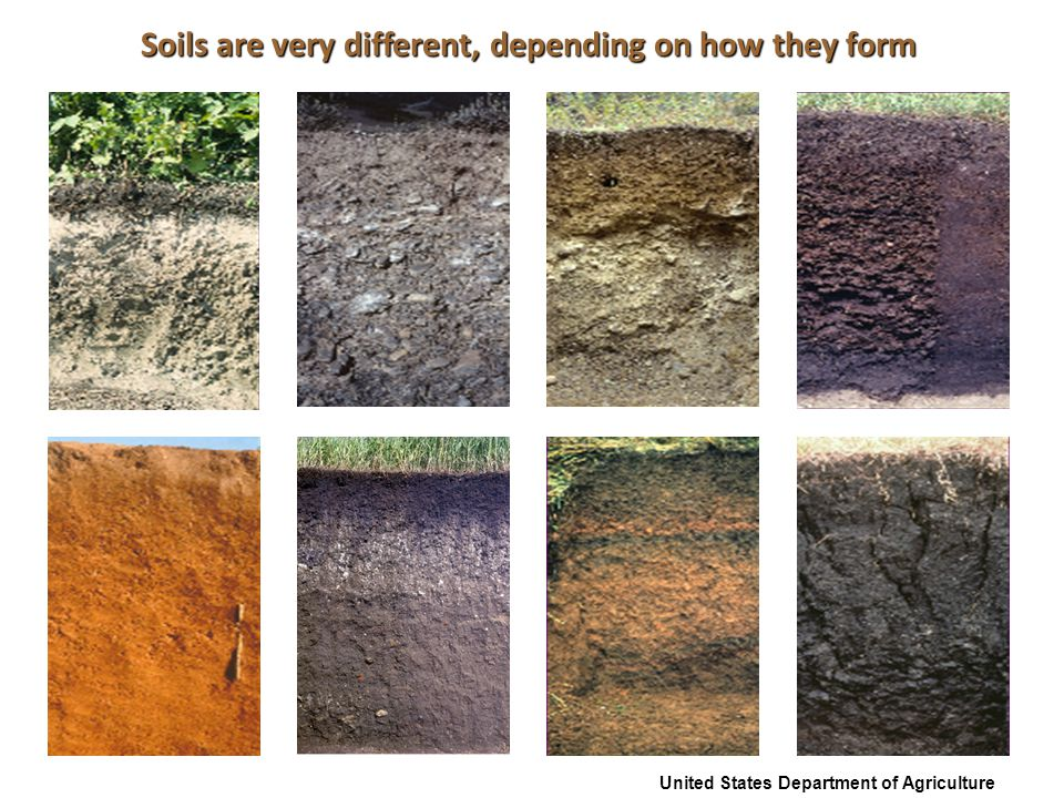 Prairie soils have a dark surface layer (horizon), are rich in minerals, and form in grasslands widespread across Earth's middle latitudes.