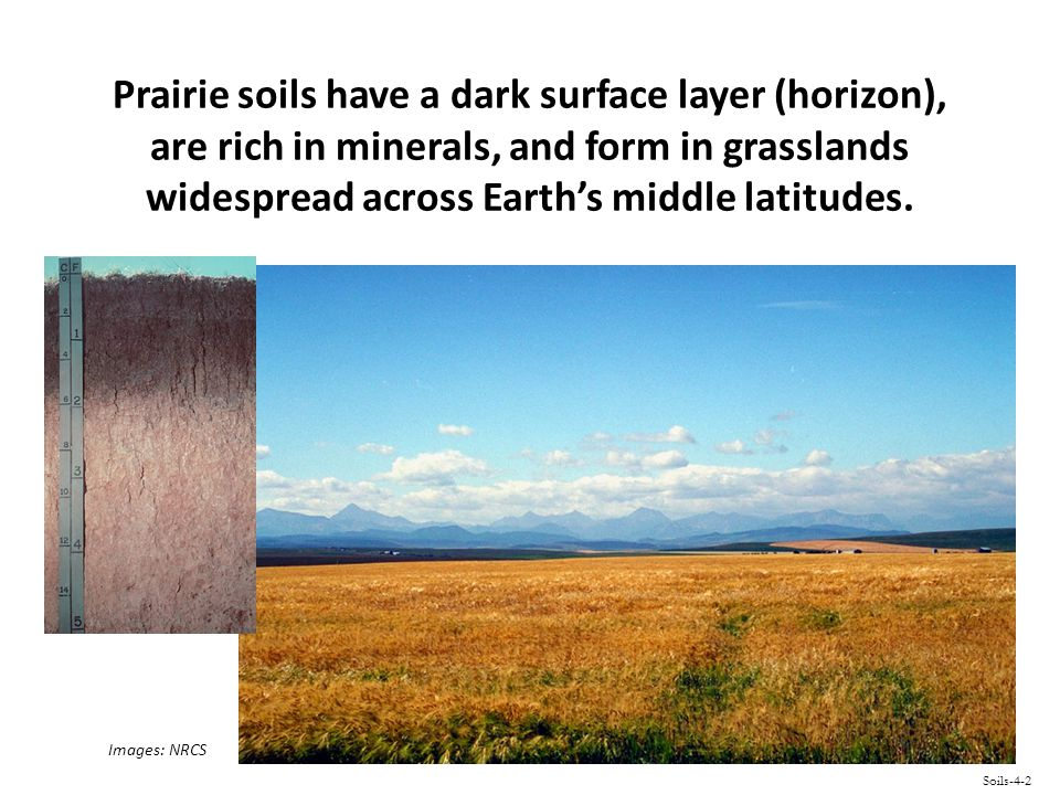 Forest soils have a light gray upper horizon, a horizon rich in aluminum and/or iron, and form in warm to cool humid regions where coniferous forests grow.