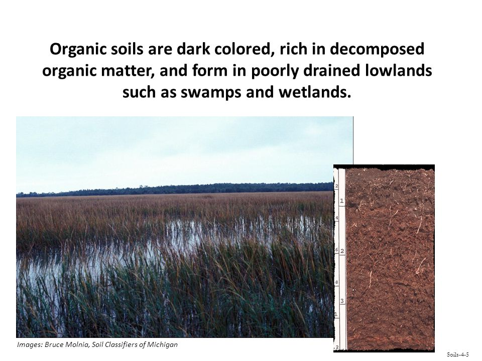 Organic soils are dark colored, rich in decomposed organic matter, and form in poorly drained lowlands such as swamps and wetlands.