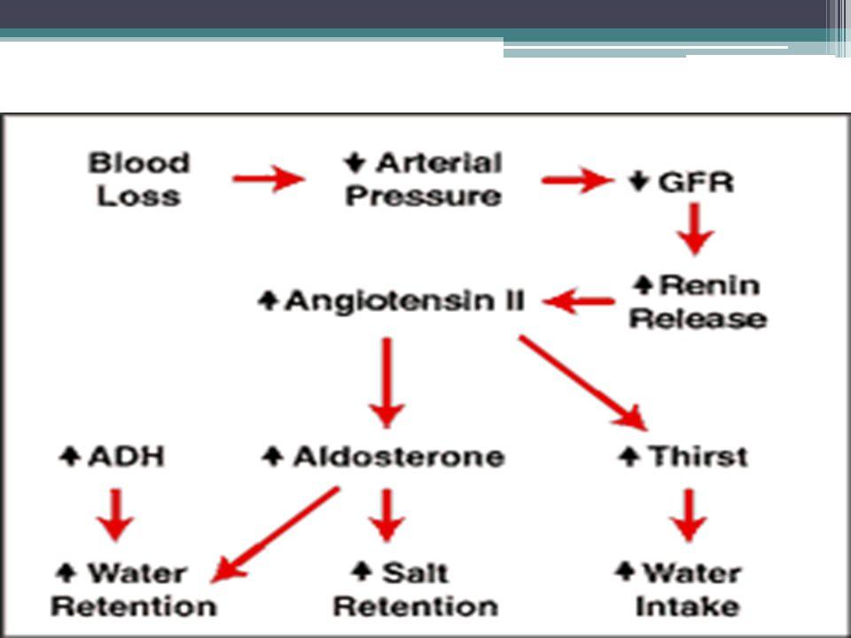 PATHOPHYSIOLOGY RENIN SYSTEM