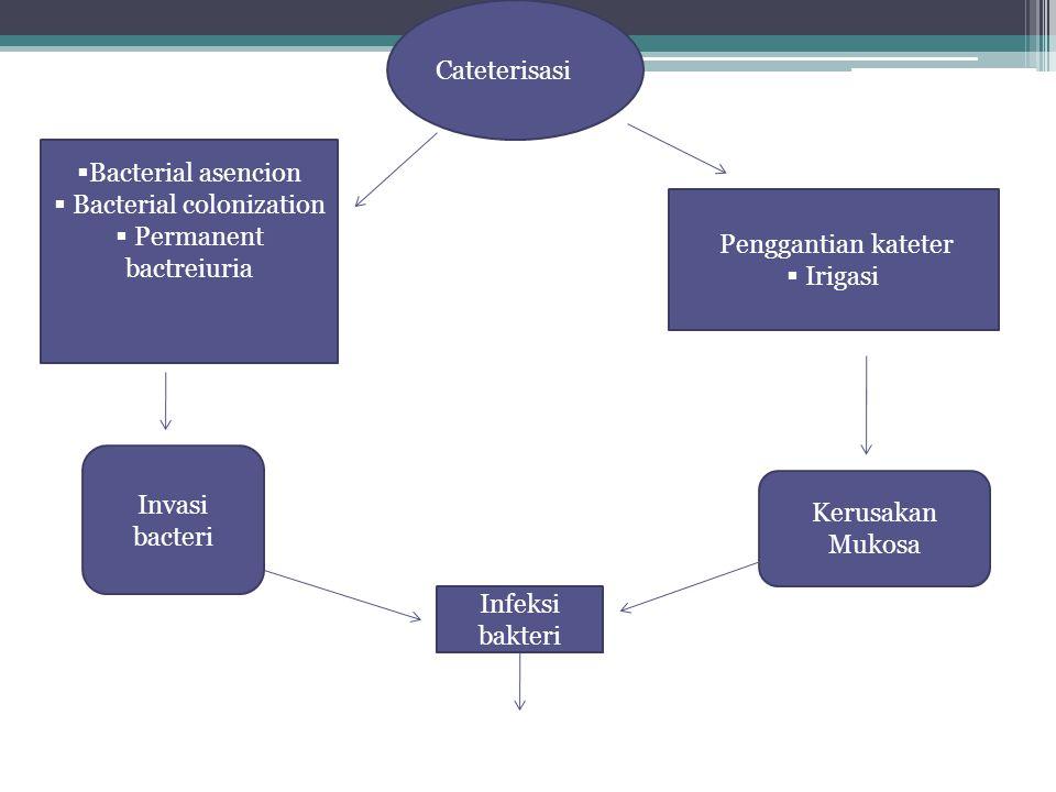 Cateterisasi  Bacterial asencion  Bacterial colonization  Permanent bactreiuria Penggantian kateter  Irigasi Invasi bacteri Kerusakan Mukosa Infeksi bakteri