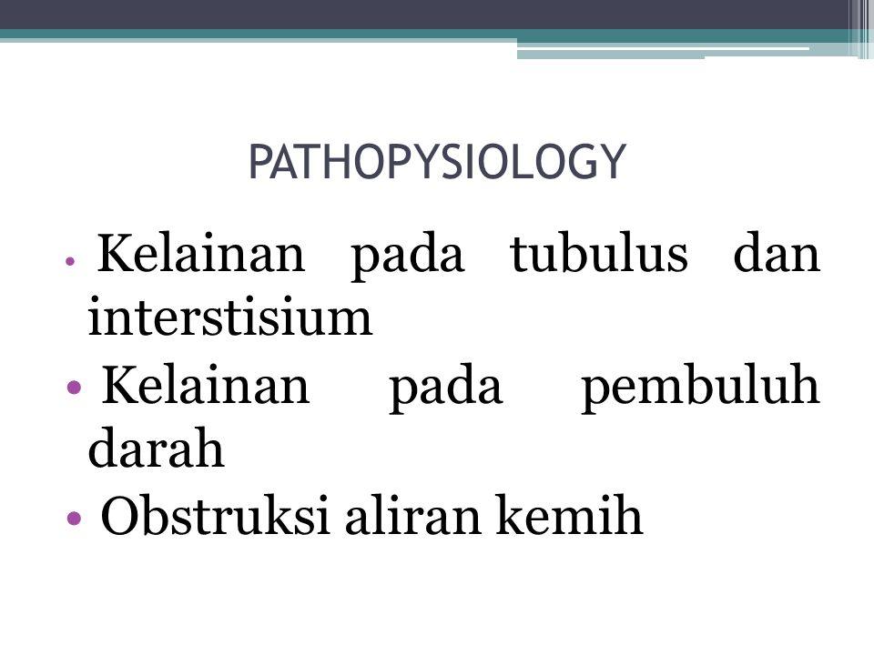 PATHOPYSIOLOGY Kelainan pada tubulus dan interstisium Kelainan pada pembuluh darah Obstruksi aliran kemih