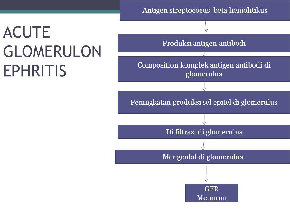 ACUTE GLOMERULON EPHRITIS Antigen streptococus beta hemolitikus Produksi antigen antibodi Composition komplek antigen antibodi di glomerulus Peningkat