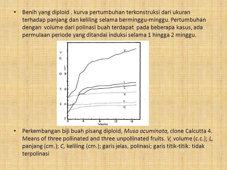Benih yang diploid. kurva pertumbuhan terkonstruksi dari ukuran terhadap panjang dan keliling selama berminggu-minggu. Pertumbuhan dengan volume dari