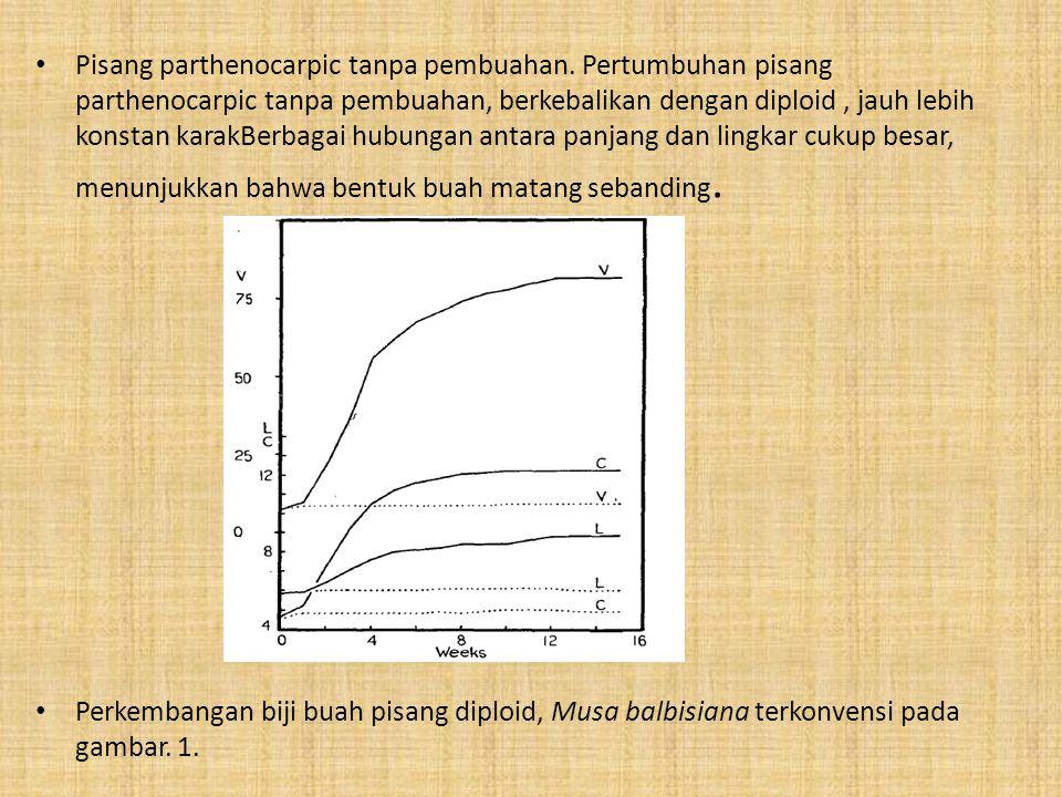 Pisang parthenocarpic tanpa pembuahan. Pertumbuhan pisang parthenocarpic tanpa pembuahan, berkebalikan dengan diploid, jauh lebih konstan karakBerbaga