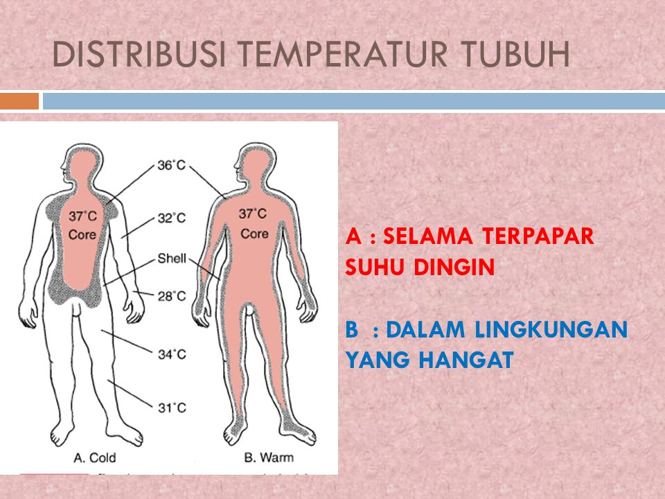DISTRIBUSI TEMPERATUR TUBUH A : SELAMA TERPAPAR SUHU DINGIN B : DALAM LINGKUNGAN YANG HANGAT