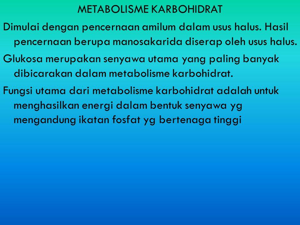 METABOLISME KARBOHIDRAT Dimulai dengan pencernaan amilum dalam usus halus. Hasil pencernaan berupa manosakarida diserap oleh usus halus. Glukosa merup