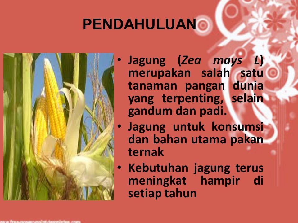 Jagung (Zea mays L) merupakan salah satu tanaman pangan dunia yang terpenting, selain gandum dan padi. Jagung untuk konsumsi dan bahan utama pakan ter