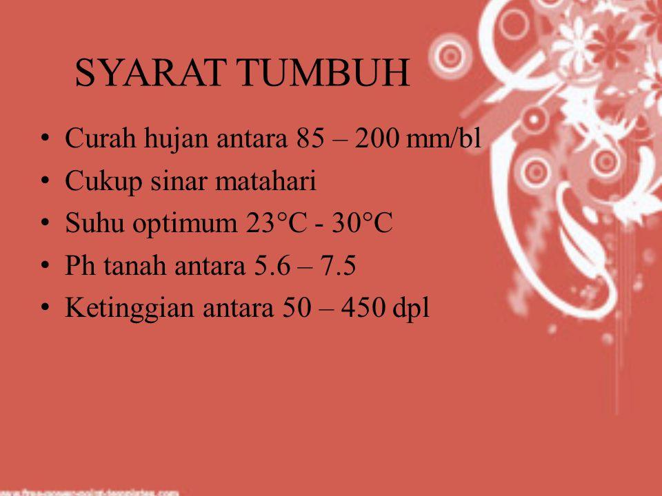 SYARAT TUMBUH Curah hujan antara 85 – 200 mm/bl Cukup sinar matahari Suhu optimum 23°C - 30°C Ph tanah antara 5.6 – 7.5 Ketinggian antara 50 – 450 dpl