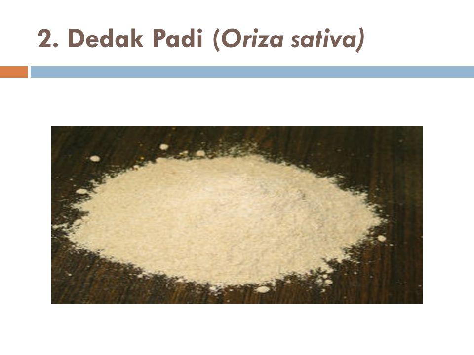 2. Dedak Padi (Oriza sativa)