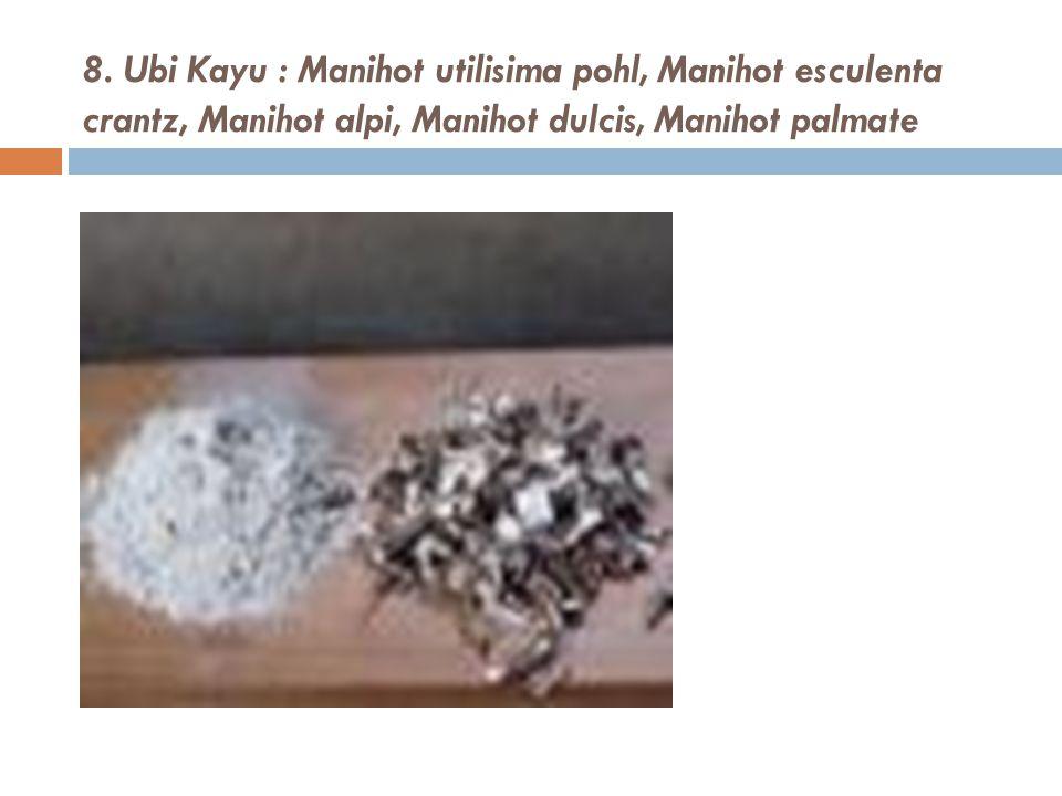 8. Ubi Kayu : Manihot utilisima pohl, Manihot esculenta crantz, Manihot alpi, Manihot dulcis, Manihot palmate