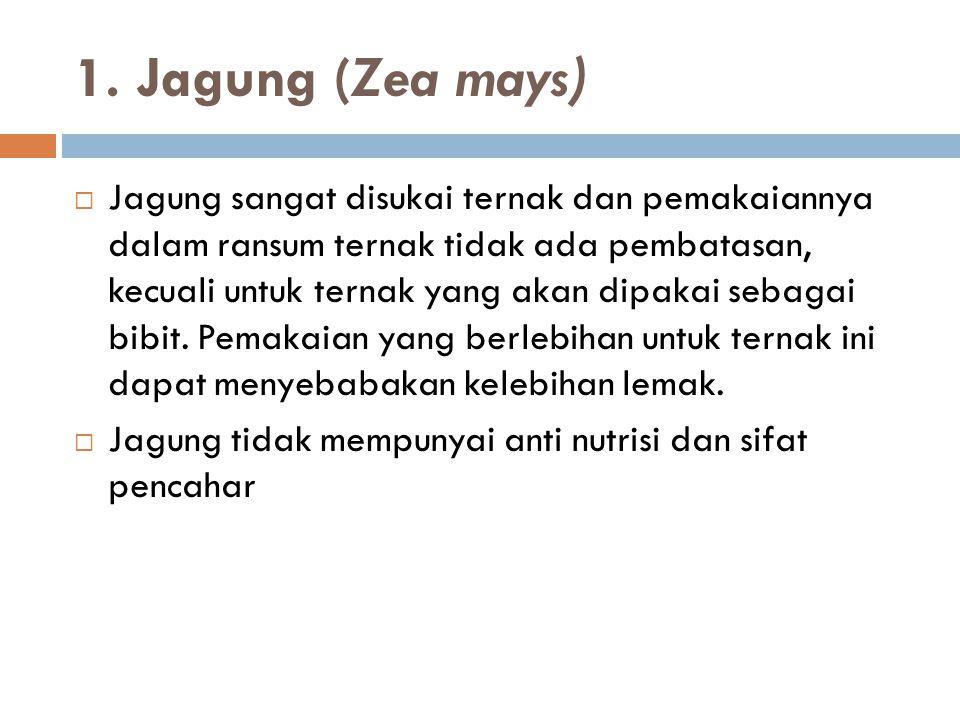 1. Jagung (Zea mays)  Jagung sangat disukai ternak dan pemakaiannya dalam ransum ternak tidak ada pembatasan, kecuali untuk ternak yang akan dipakai
