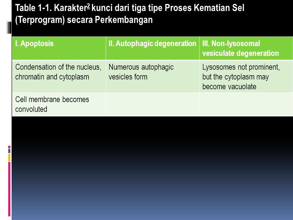 Table 1-1. Karakter 2 kunci dari tiga tipe Proses Kematian Sel (Terprogram) secara Perkembangan I. ApoptosisII. Autophagic degenerationIII. Non-lysoso
